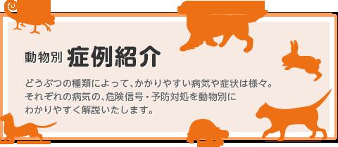 動物別症例紹介